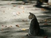 可愛小動物:x流浪貓的街角
