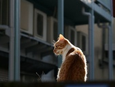 可愛小動物:流浪貓的街角w