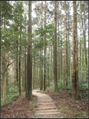 大狐狸爬上東眼山:東眼山 (15).jpg