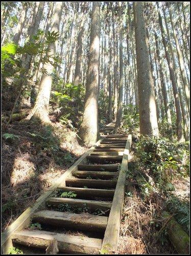 加里山登山步道:加里山 (14).jpg