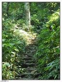 五指山登山步道:五指山登山步道 (9).jpg