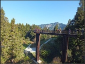 阿里山森林步道:阿里山步道 (10).jpg