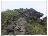 巨齒稜紅星杜鵑花:巨齒稜紅星杜鵑 (10).jpg