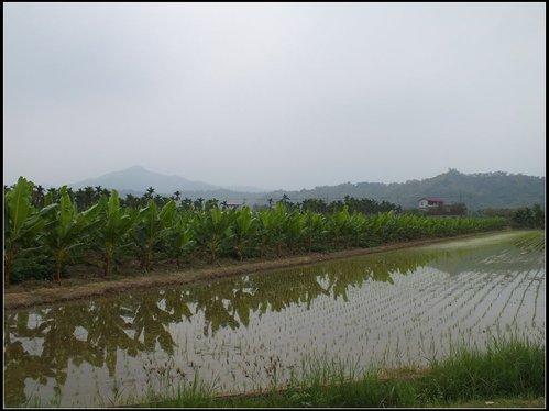 花海、中圳湖 :中圳湖 (19).jpg