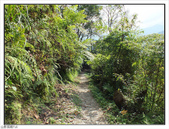 棲蘭森林遊樂區:棲蘭森林遊樂區 (50).jpg