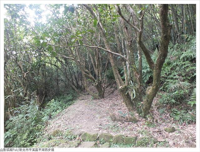 平湖西步道 (7).JPG - 平湖西步道