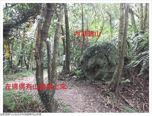 梅花山步道 (19).JPG - 梅花山步道