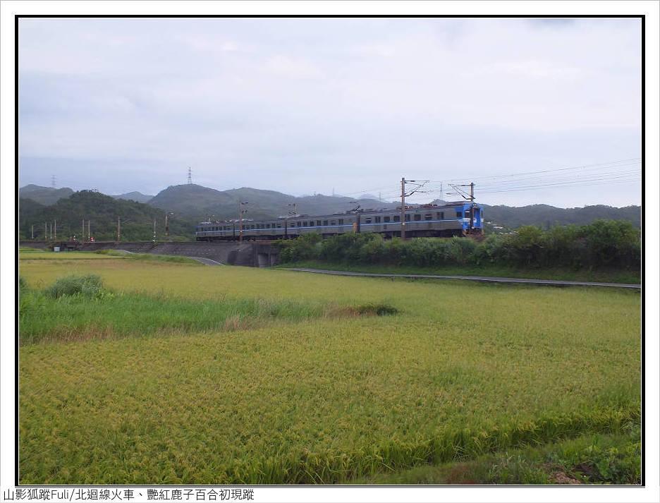 火車、艷紅鹿子百合 (42).jpg - 火車、艷紅鹿子百合