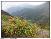 巨齒稜紅星杜鵑花:巨齒稜紅星杜鵑 (14).jpg