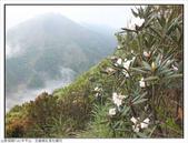 巨齒稜紅星杜鵑花:巨齒稜紅星杜鵑 (73).jpg