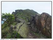 巨齒稜紅星杜鵑花:巨齒稜紅星杜鵑 (11).jpg