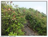 巨齒稜紅星杜鵑花:巨齒稜紅星杜鵑 (18).jpg