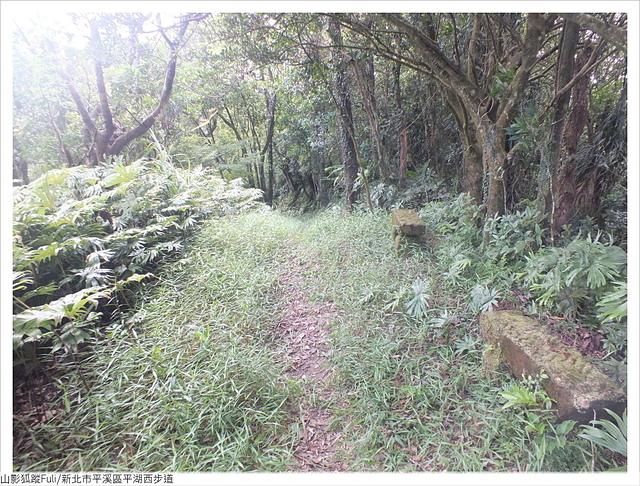 平湖西步道 (39).JPG - 平湖西步道