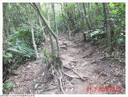 梅花山步道 (4).JPG - 梅花山步道