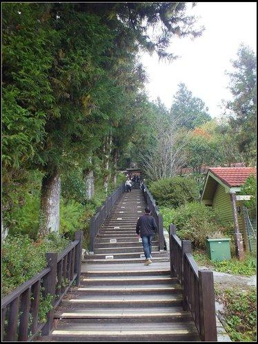 太平山莊、鐵杉林步道、原始森林步道:鐵杉林步道 (4).png