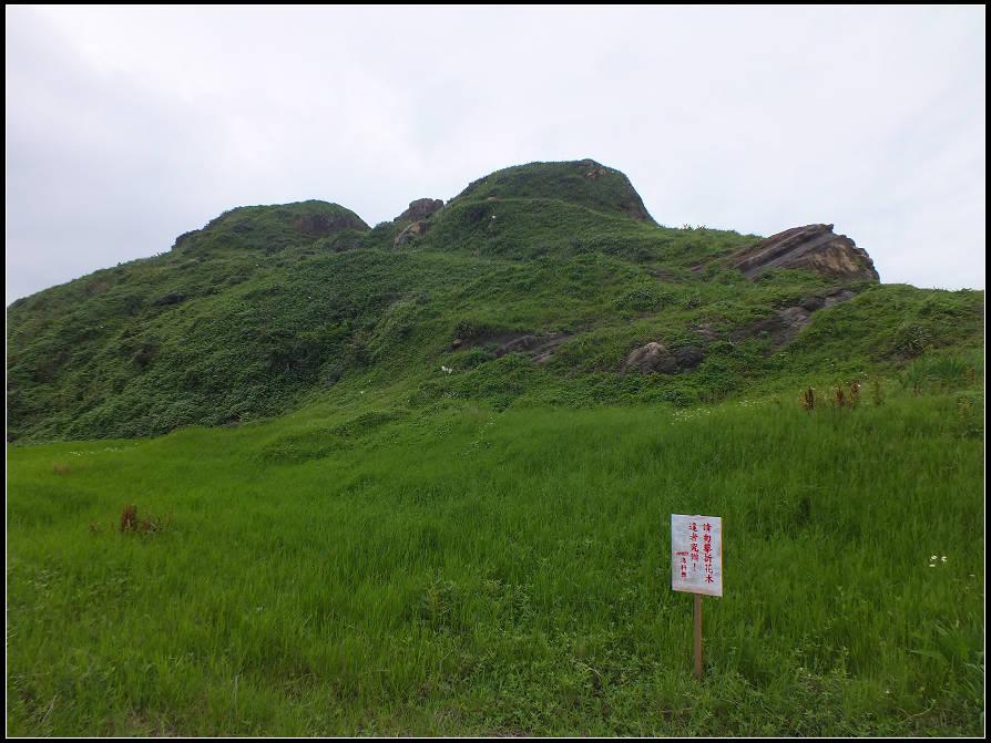 潮境百合花:潮境百合花 (5).jpg