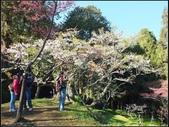 阿里山森林步道:阿里山步道 (11).jpg