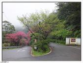 山霧山櫻:山霧櫻花 (17).jpg