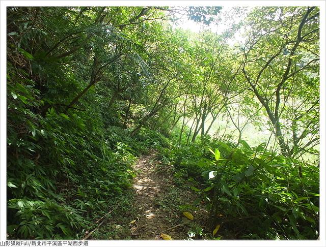 平湖西步道 (83).JPG - 平湖西步道