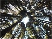 阿里山森林步道:阿里山步道 (17).jpg