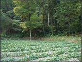 清涼有勁柑腳溪(盤山坑溪、中坑溪、下坑溪) :柑腳溪 (10).jpg