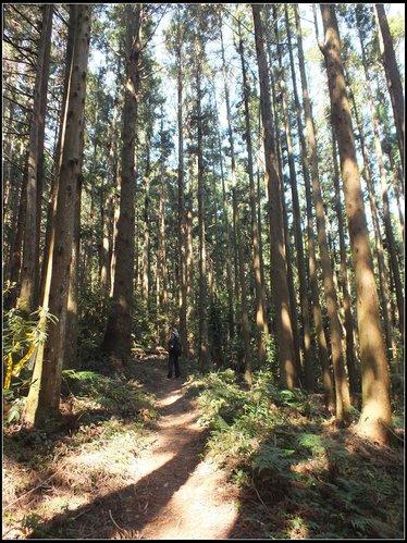 加里山登山步道:加里山 (11).jpg