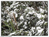 五分山步道雪景:五分山雪景 (6).jpg