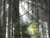 加里山登山步道:加里山 (4).jpg