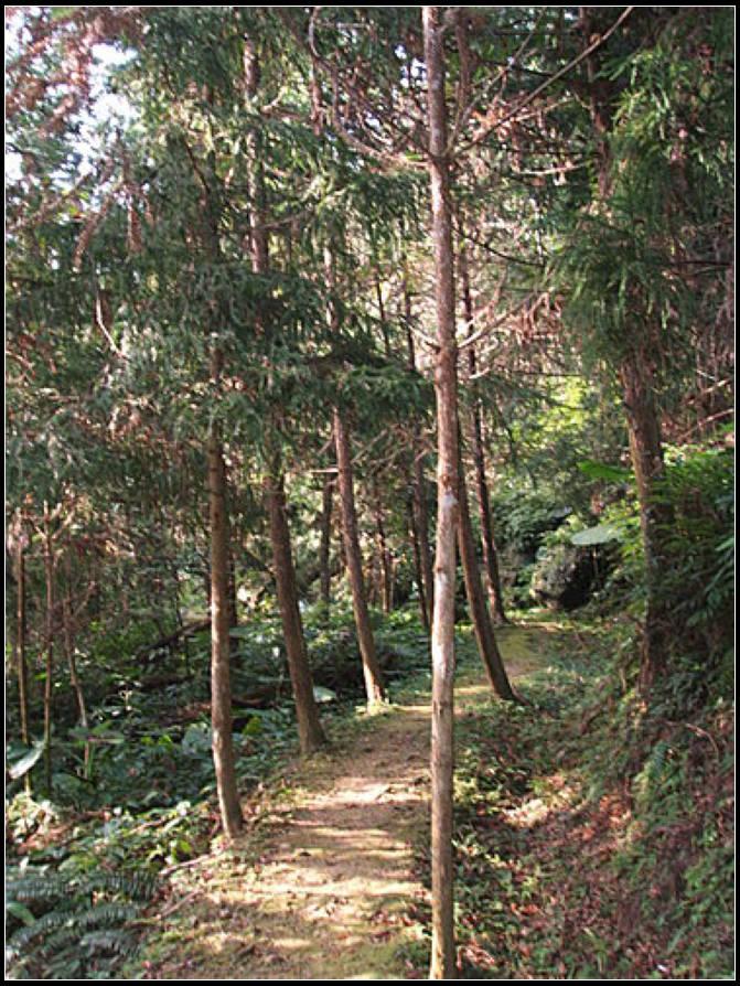 小東河登山步道 :小東河 (7).jpg