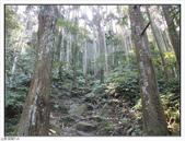 五指山登山步道:五指山登山步道 (5).jpg