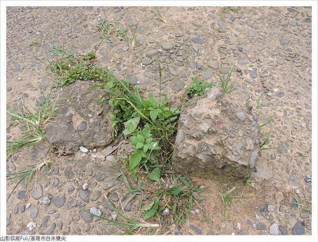 白米甕尖 (26).JPG - 白米甕尖