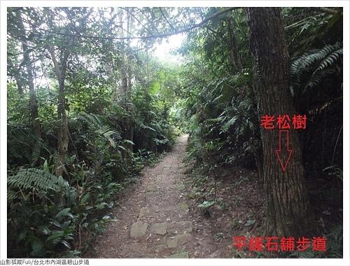 碧山步道 (11).JPG - 碧山步道