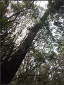 太平山莊、鐵杉林步道、原始森林步道:鐵杉林步道 (4).jpg