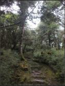 太平山莊、鐵杉林步道、原始森林步道:鐵杉林步道 (14).png