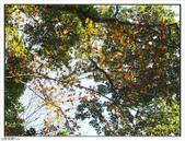 內洞森林遊樂區:內洞森林遊樂區 (32).jpg