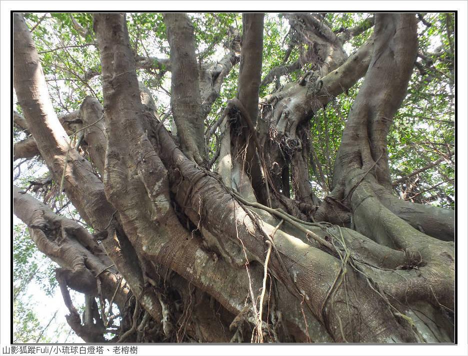 小琉球白燈塔、老榕樹:小琉球白燈塔、老榕樹 (6).jpg