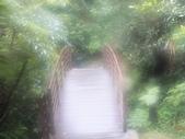 雨霧五分山:五分山稜線步道 (60).JPG