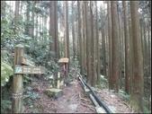 加里山登山步道:加里山 (3).jpg