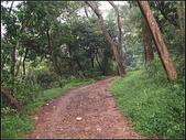 羊稠坑森林步道:羊稠坑步道 (4).jpg
