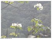 金字碑古道:金字碑古道 (10).JPG