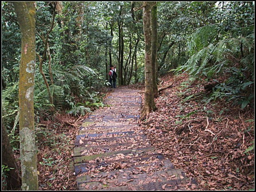 白雞山步道:白雞山 (26).jpg