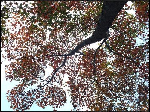石門楓紅:石門楓紅 (17).png