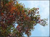石門楓紅:石門楓紅 (7).png