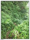 五指山登山步道:五指山登山步道 (49).jpg