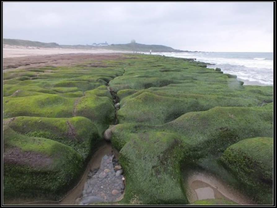 老梅綠石槽 :老梅綠石槽  (9).jpg