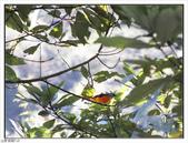 內洞森林遊樂區:內洞森林遊樂區 (6).jpg