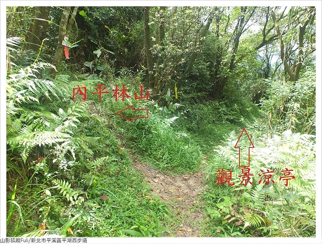 平湖西步道 (66).JPG - 平湖西步道