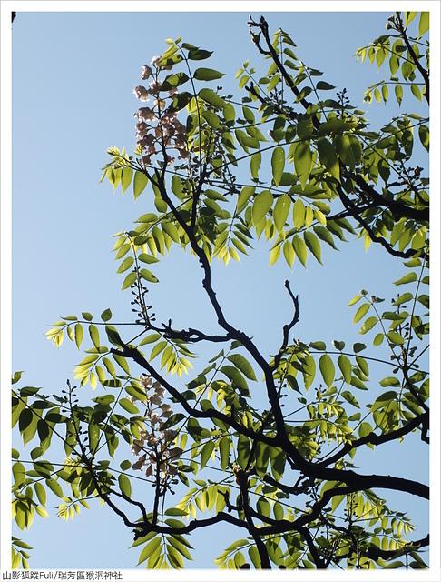 猴洞神社 (57).JPG - 猴洞神社鐘萼木