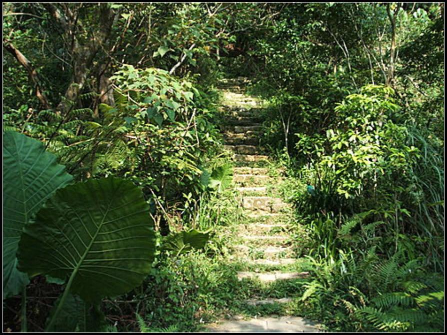 福州山森林步道:福州山 (8).jpg