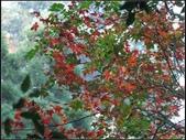 鳥嘴山:鳥嘴山 (3).jpg